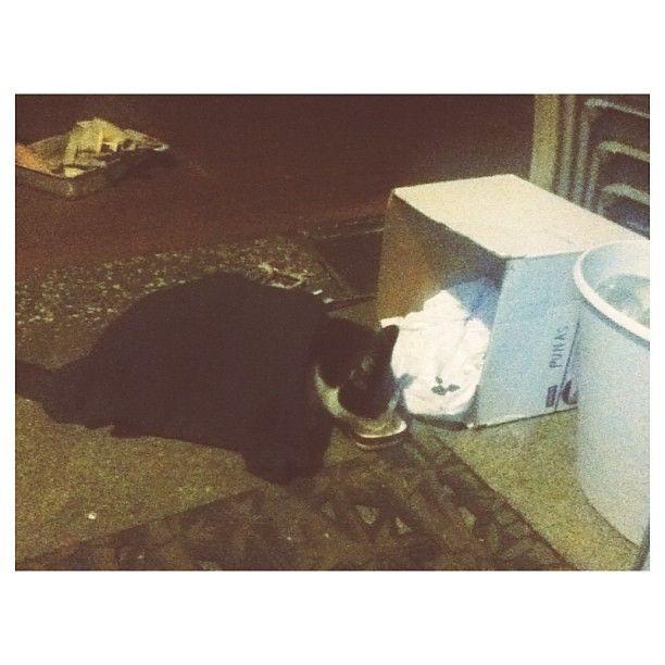 Two Cat Hotties Drink Some Milk