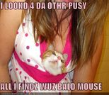 LOOKD 4 DA OTHR PUSY ALL I FINDZ WUZ BALD MOUSE  Cheezburger