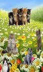 LS Ukrainian Gentle Angels Sets 201215 torrent (A5Wzgr)  Sci?gaj ZA