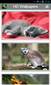 siberian mouse masha nude sucking 7 image results