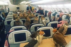 Saudi prince buys 80 first class tickets for his hawks