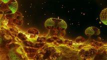 Nudiplanet Net
