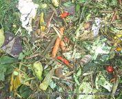 Pupuk Organik, Biogas dan Bio Elektrik berbahan sampah Organik solusi