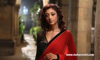 Paoli Dam & Erotic Thriller  Instinct effect?