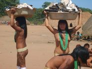 Xingu park is located in the state of Mato Grosso, Brazil  It is home