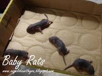 Hope  Love  Care  [Chloe]: It's Baby Rats! (Look like baby dogs