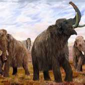 The Paranormal Pastor: Woolly Mammoth Filmed In Siberia?