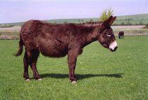 donkey penis nak cakap lagi ker tahu kan aper tu kan donkey