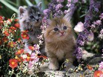 Nota: Click aqu� para ver m�s im�genes de gatitas