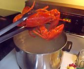 Pink Apron Baker: How to Cook Lobster