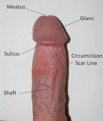 Gambar Penis Besar Dan Panjang