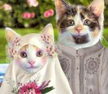 Mr. and Mrs. Pussy Cat  Cutest Natural Wallpaper