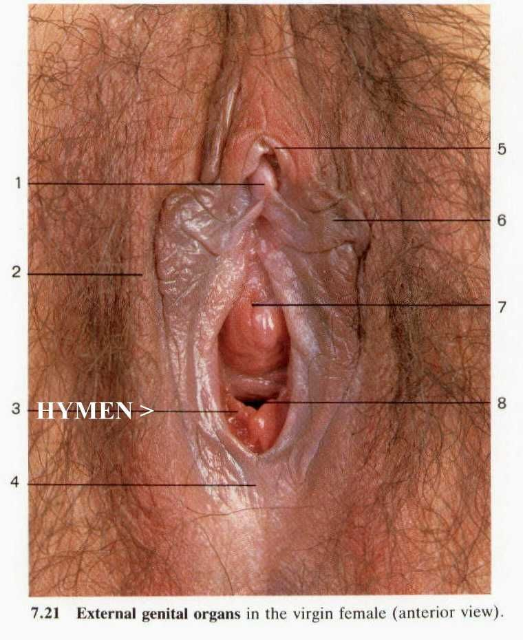 Hymen Photos