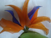 Krithi creations: StockingBird of paradise flower