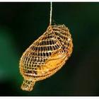 Kepompong Seperti Jala Berwarna Emas Yang Unik di Hutan Amazon ~ Gaban Comel