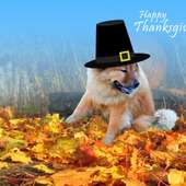 The Top 5 Thanksgiving Tips For Pets
