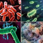 Ciri-Ciri dan Struktur Bakteri (Eubacteria) | Bedah Ilmu Biologi