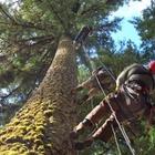 Tradisi Pelik Memaki Pokok Kayu Supaya Cepat Mati