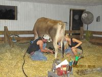 milked her using the milking machine and by hand. Well, actually I