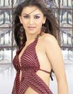 Bollywood: Hansika Motwani Hot Pics And Wallpapers 2011