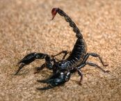 Day In The Life Of: Scorpions