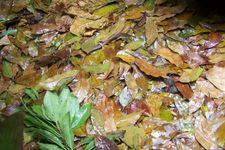 Pemanfaatan Sampah | azharmind com