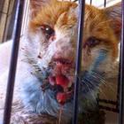 Derita Si Kucing.....Dipukul Hingga Hancur Mulut Kerana Mencuri Ikan