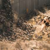 World War Z Also Stars Mireille Enos, Daniella Kertesz, James Badge