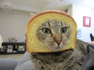 The Breaded Cats (or Breading Cats, or Cat Breading) website has been