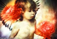 Tiny angels photography photography pictures galleryfeed « Photo