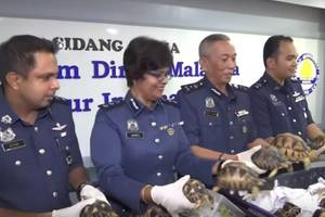 Hundreds of endangered tortoises seized by Malaysian authorities