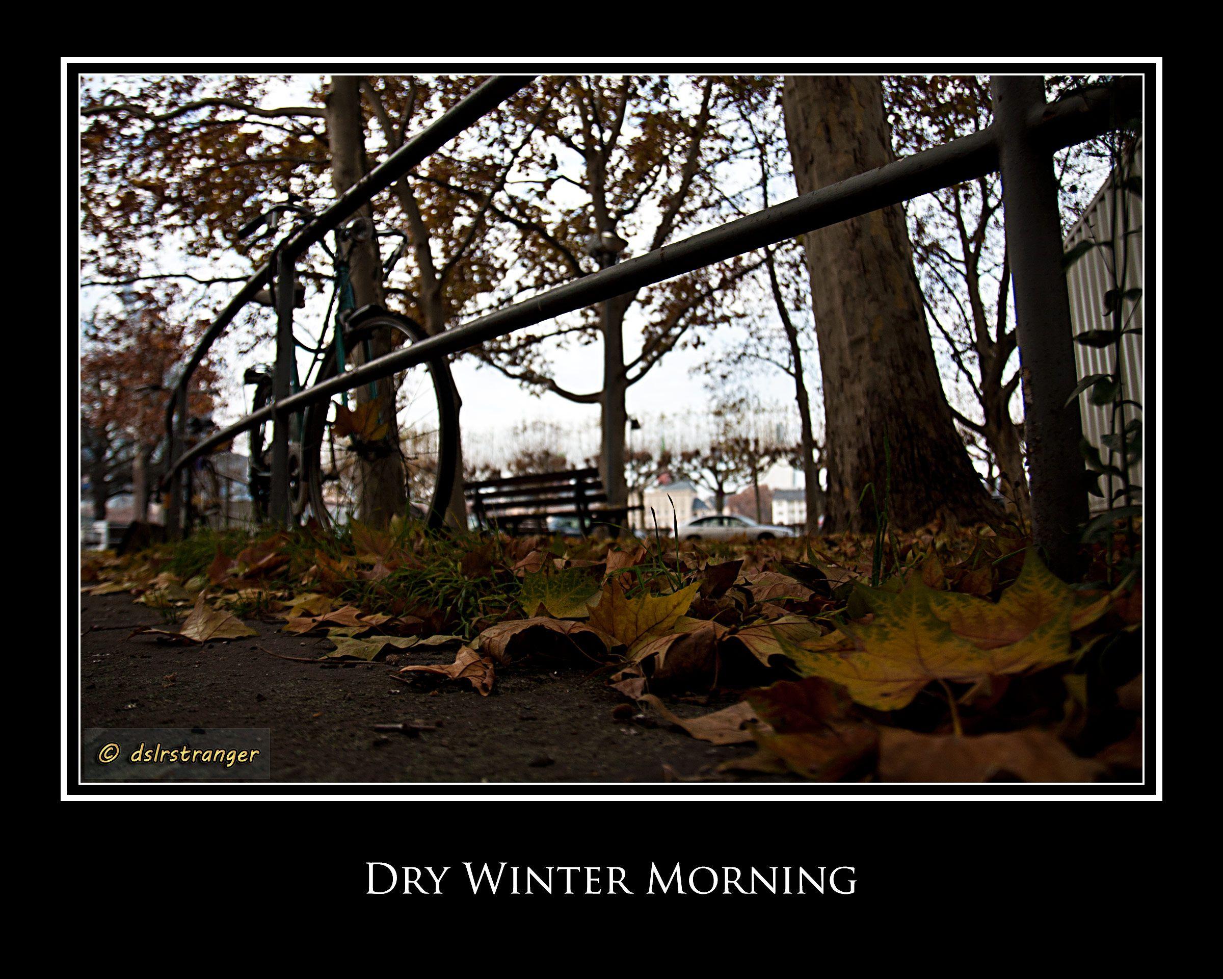 Morning Dry