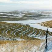 Fields044 1 Palouse Fields During Winter Patterns Of Contour Plowing