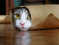 SMILE: Funny Pets (Pet lovers, you're gonna love this ^^)