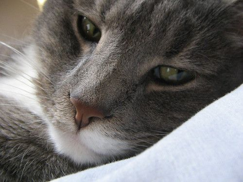 Cat Bangles Sexy Cat 2