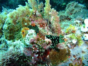 nudis | Flickr - Photo Sharing!