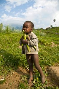 - Sugar Cane Treat for a Very Poor Boy | Flickr - Photo Sharing