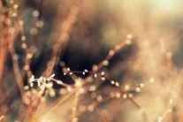 Barely Budding (#1360) | Flickr  Photo Sharing!