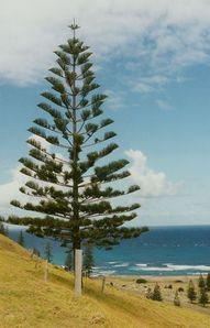 Norfolk Island - Travel Photos by Galen Frysinger, Sheboygan