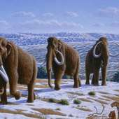 Woolly_mammoth 38