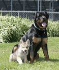 Barking but true: The touching bond between a Rottweiler and a