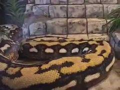 Biggest Sinkholes on Strike Largest Snake Guinness World Records 2011