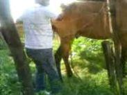 Cavalo Comendo �gua