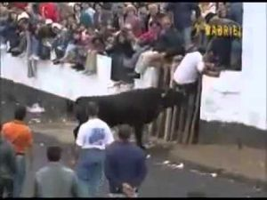 BULL Funny 2012 More Videos www BaltiTheGreat tk