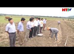 Thạch hà sản xuất vụ đông sau lũ