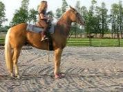 Meyers Gold Angel  14 year old finished Barrel and Rope Horse  SUPER