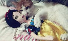 Cat + Snow White doll (rule 34!!!) ( i129 photobucket com )