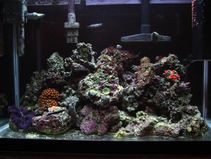 Bare Bottom Reefs!  General Discussion  NanoReef com Forums