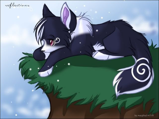 Ani Black Fox Blinded By Blankets Of White