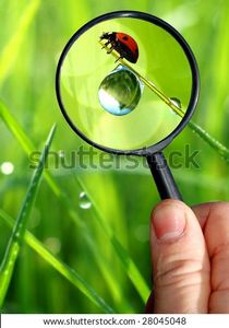 Naturalist Stock Photo 28045048 : Shutterstock